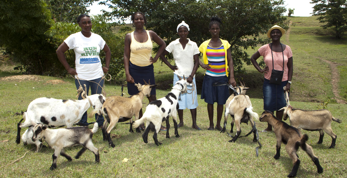 Goats in Marialapa